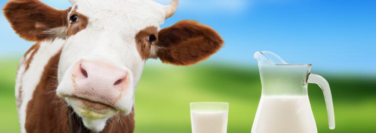 dairy manuafactures in sri lanka